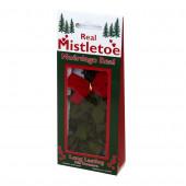 Fresh Christmas Mistletoe